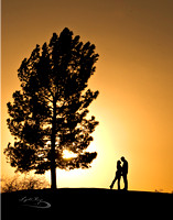 Engaged couple by a tree in sunset silhouette