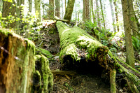 021_Whistle Lake-Whidbey06132017